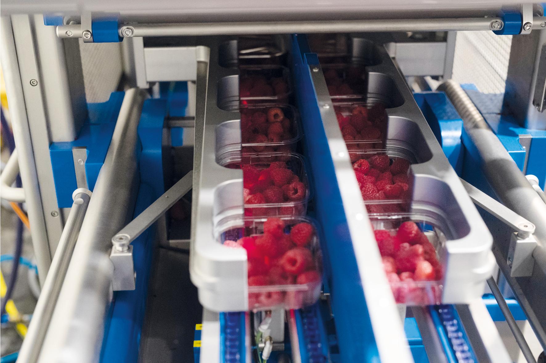 Sealpac A-series dubble lane voor fruitindustrie